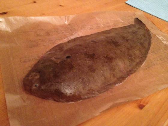Dover Sole fish
