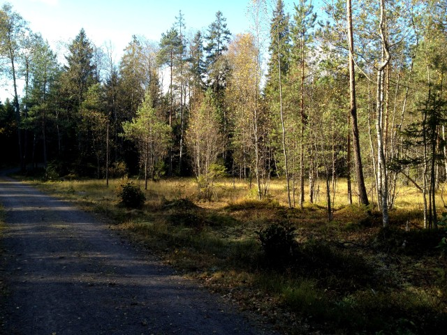 runninginforest